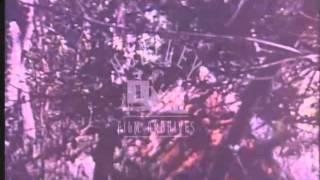 1978 fighting in Rhodesia.  Zimbabwean War of independence.  Archive Film 91258