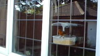 Robins Love Mealworm Crumble And Window Bird Feeders