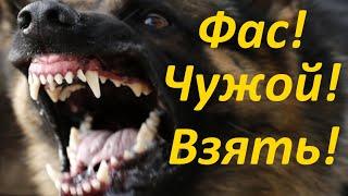 Фас, Чужой, Взять или немного о том как мы учим собак кусаться