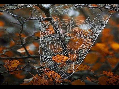 🔝 ХуДоЖнИкИ | Живопись маслом | Рисуем вместе | Осень паутинка | Капельки | Александр Григорьев