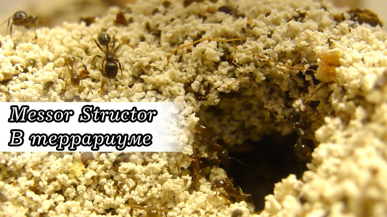 Объявление раздела животные. Террариум для насекомых купить, продать или отдать в пензенской области на avito.