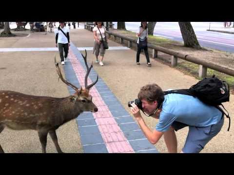 Nara Deer (without music) - YouTube