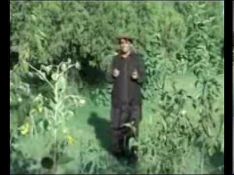 Gul Rauf new Pashto song...