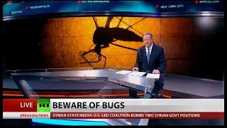 Bug Out: Beware of Diseased Bugs, Say Experts [2018 Report]