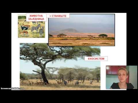 Izokrenuta učionica - Ekologija rečnik