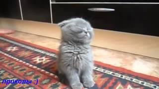 Котенок засыпает стоя )))