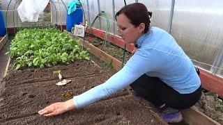 6 соток в конце апреля. Еду на дачу садить рассаду огурцов. Досеяла все цветы и капусту на рассаду.