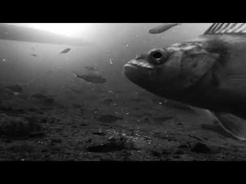 Как выглядит мотыль для рыбной ловли