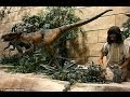 'Humans lived with dinosaurs': Australia