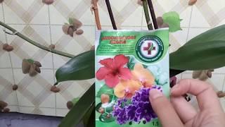 результат после применения цитокининовой пасты на орхидее. Как стимулировать цветоносы