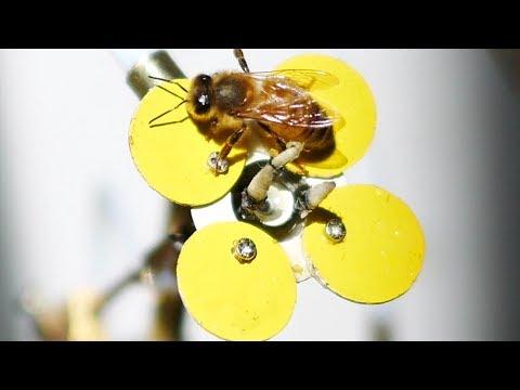 0 - 3D-gedruckter Bestäuber soll Bienenbestand retten