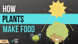 (Photosynthesis) How to get Plants Food? in Hindi