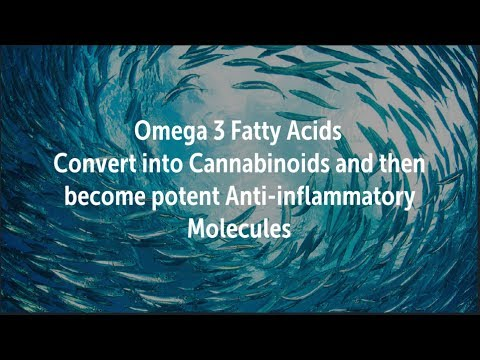 Omega 3's EPA and DHA Convert into Cannabinoids then turn into Potent Anti-inflammatory Molecules