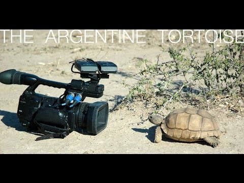Turtle Conservancy - The Argentine Tortoise 2008