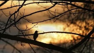 His Eye Is On The Sparrow (Instrumental Rendition)