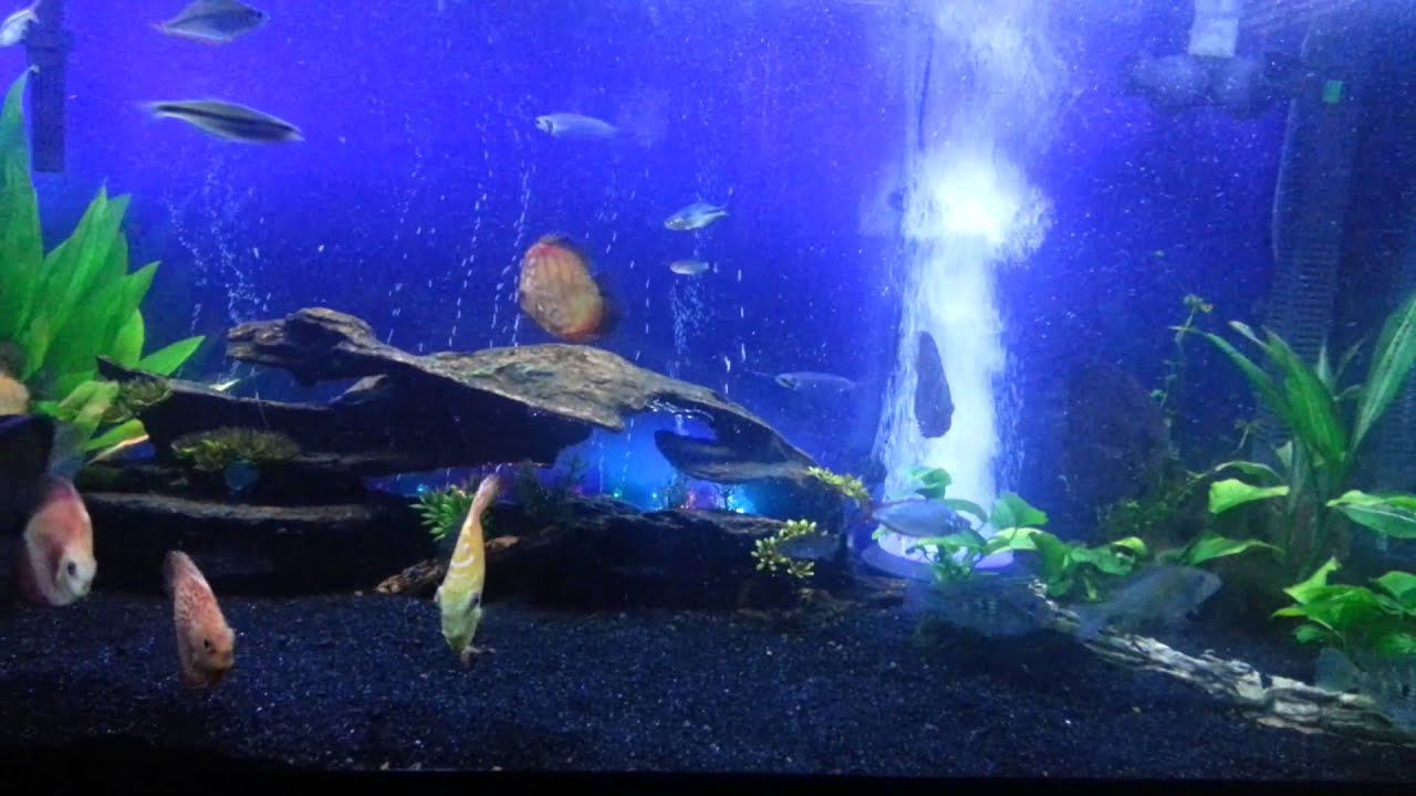 Planted Discus Tank with Air Stone - YouTube