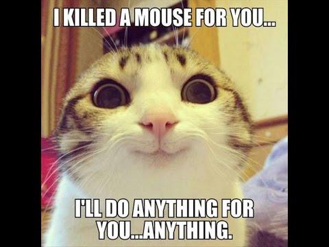 Cute animal memes clean - photo#18