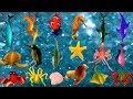 Sea Animals Names | Baby Shark, Nemo & Sea Animals Puzzle | Fun Video For Kids