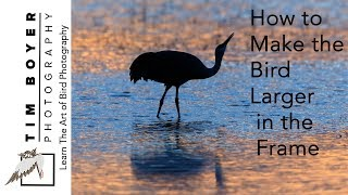 How to Make the Bird Larger in the Frame