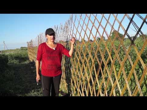 Забор из ивы своими руками