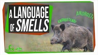 """地球上で最も使われる言語は""""匂い""""? 動植物たちのコミュニケーション方法"""