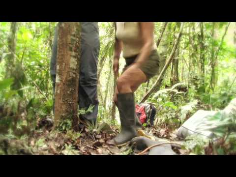 Video Journal 2 - Climbing and Collecting Plants
