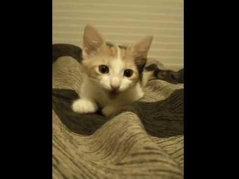 Adorable talking kitten