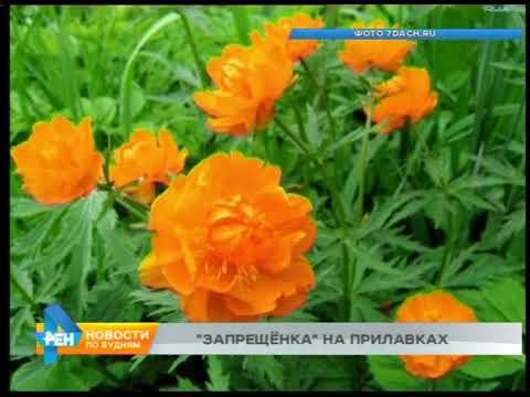 Растения, занесённые в Красную Книгу, всё чаще продают в Иркутске