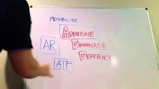 Adenosine Deaminase Deficiency: Type of SCID