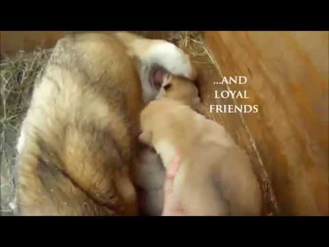 Iditarod Song by Alaskas Hobo Jim