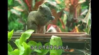 2014冬 赤腹松鼠