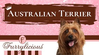 Austrailian Terrier Breed Facts