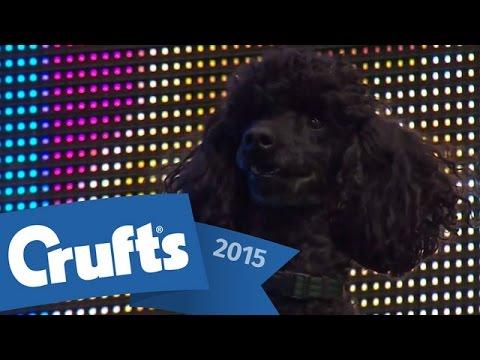 Agility - Crufts Singles Heat - S/M/L   Crufts 2015