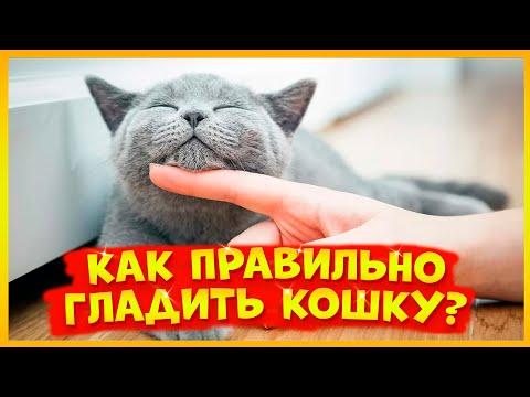 Вопрос: Почему не все домашние кошки любят, чтобы их гладили?