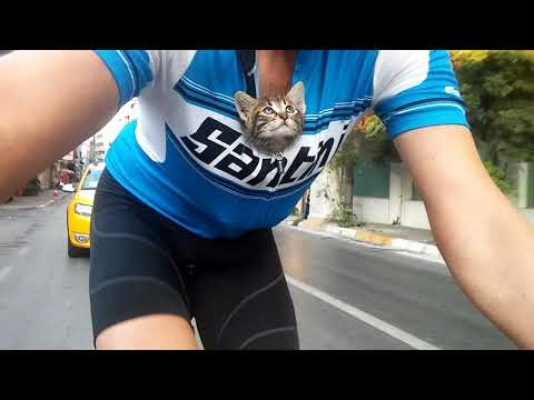 I carried an abandoned kitten 30 km by bicycle
