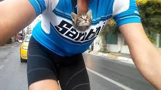 見知らぬ人の胸に抱かれ疾走する猫、保護され新しい家族の元へ