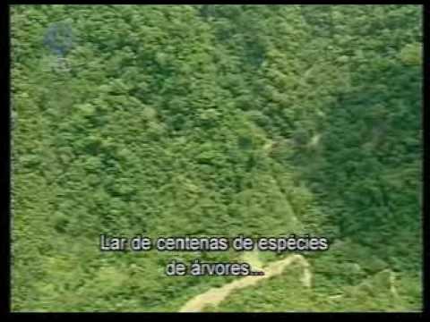 PARQUE NACIONAL CORCOVADO. TODO UN GIGANTE
