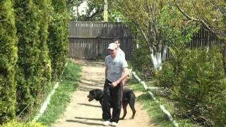 Dog Training : Rottweiler Attack Commands