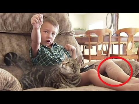 Cat Protects Boy From Dog Youtube