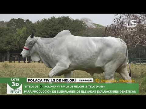 Lote 3D Polaca FIV LS