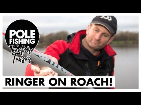 Ringer On Roach