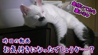 昨日UPした動画 「頭が抜けなくなり焦る、猫フク姫」をUPしましたが htt...