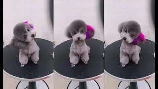 It's Funny Time 2018 ♥ Funny Dogs Doing Funny Things