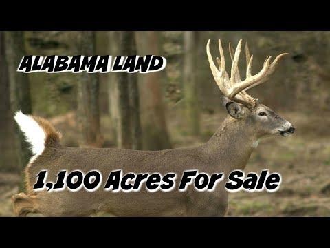 Alabama Land For Sale   1000 Acres For Sale