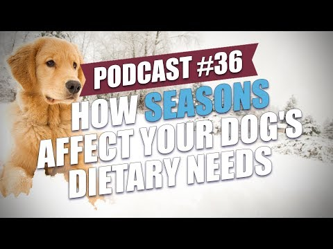 TOP #36: How Seasons Affect Your Dog's Dietary Needs