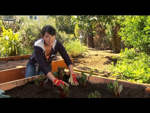 How to Produce Greater Yield in Your Vegetable Garden