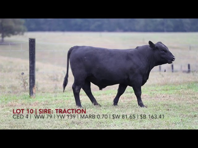 Edgewood Angus Lot 10