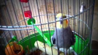 1 видео. Мои домашние животные!