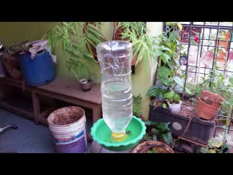 How to create bird water feeder at home, very simple and economy idea  DIY