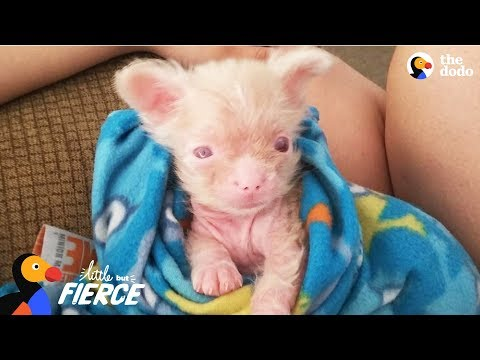 Newborn Albino Puppy Shows His Mom He's A Survivor - LUCKY | The Dodo Little But Fierce